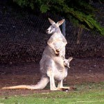 5 minuten #13 – Wat elders gebeurde tijdens Nederland – Australië