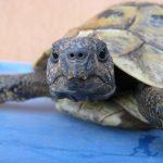 Leven en lijden van Donatello, Ninja Turtle (v.h. beeldhouwer)